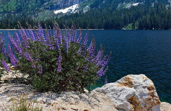 Yosemite 004